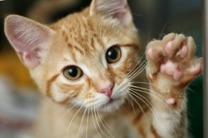 The Cat's paw theory of employment discrimination